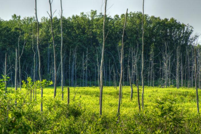 Tinkers Creek marshland