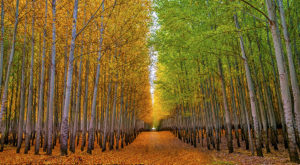 Oregon's Tunnel Of Trees Is Positively Magical And You Need To Visit