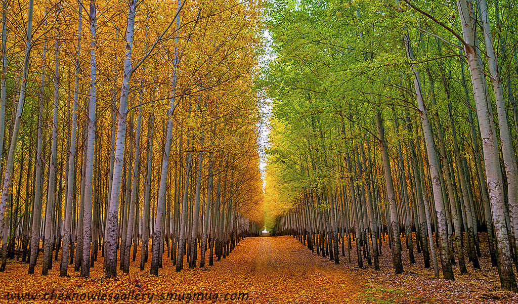 Oregon S Tunnel Of Trees Is Positively Magical And You