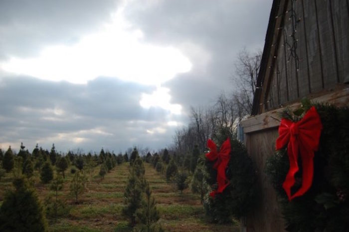 Barker's Christmas Tree Farm, Lexington - Pick Out Your Own Christmas Tree At These 10 Picture Perfect Farms