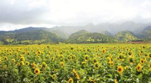 The Beautiful Landscape In Hawaii You'll Only See Once A Year