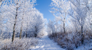 These 12 Picturesque Trails In Iowa Are Perfect For Winter Hiking