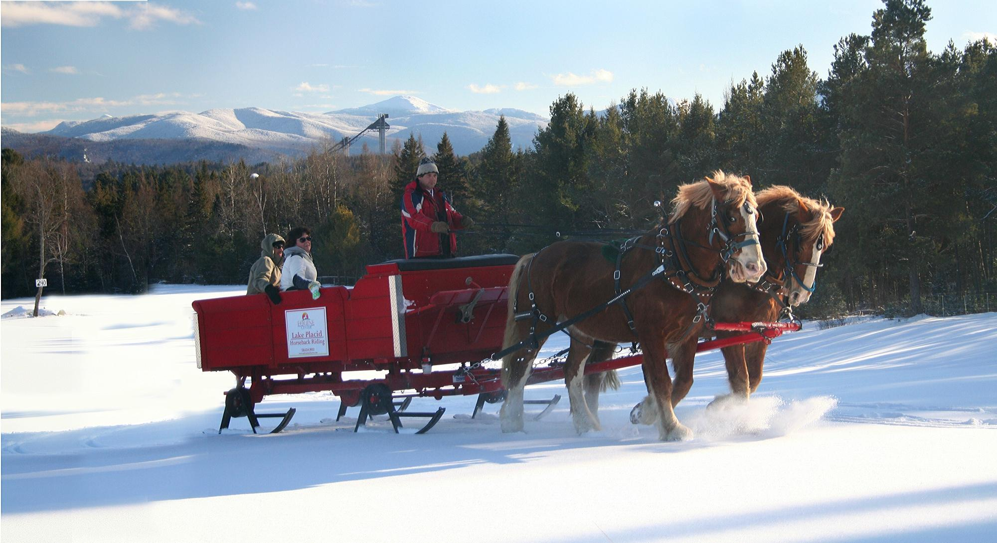 These 5 Horse Drawn Carriage Rides In New York Are Pure Magic