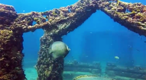 The Neptune Memorial Reef In Florida Is An Attraction That's Unbelievable And Beautiful