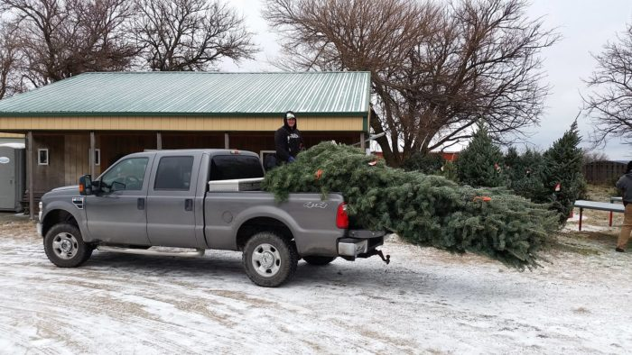 Nordstrom's Christmas Tree Farm - Omaha - 11 Places To Get Fresh Live Christmas Trees In Nebraska