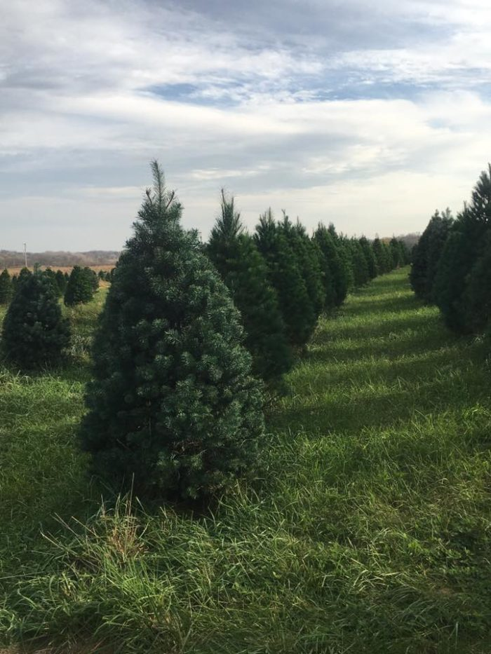 11 Places To Get Fresh Live Christmas Trees In Nebraska