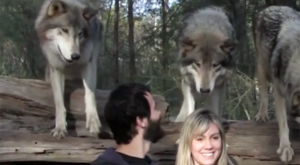 This Unforgettable Wolf Sanctuary In Florida Is An Incredible Experience For You And Your Family