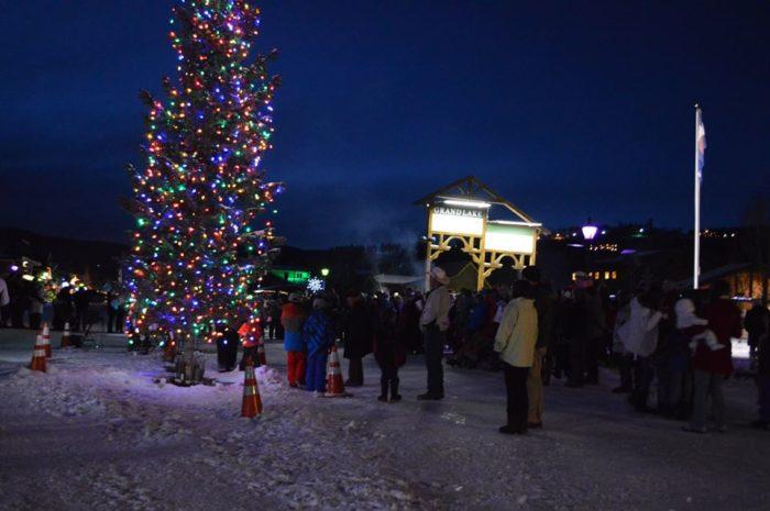 Christmas Trees Colorado Springs