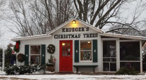 These 11 Lovely Christmas Tree Farms In Minnesota Are Picture Perfect For A Winter Day