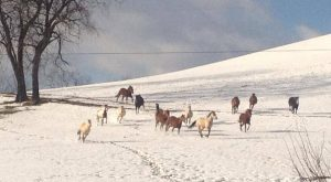 The Winter Horseback Riding Trail In Maryland That's Pure Magic