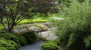 1. National Arboretum - 3501 New York Ave NE, Washington, DC 20002