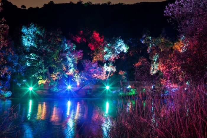 Visit this enchanted forest in southern california this winter - Descanso gardens enchanted forest of light ...