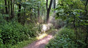 5 Natural Hidden Gems In Cincinnati Most People Don't Know Even Exist