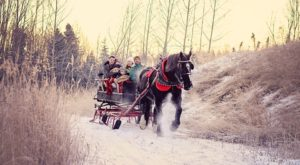 Build memories that will last a lifetime and surprise your family with the perfect Alaska themed Christmas card. Because this is too epic to not have a photo shoot!