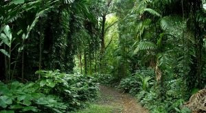 The Rainforest Escape In Hawaii That's Perfect For When You're Feeling Adventurous