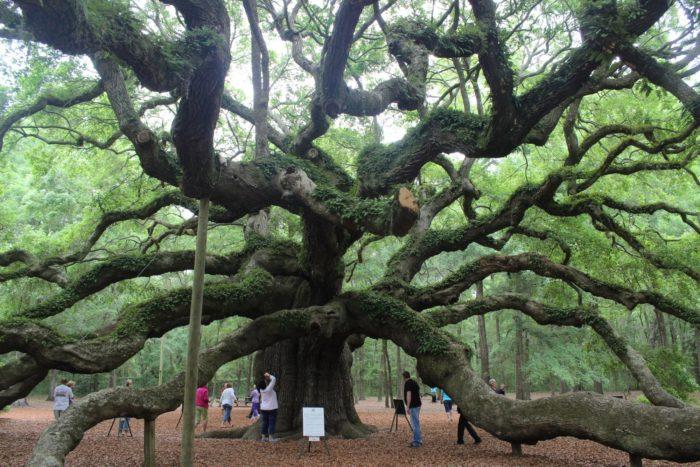 Huge Find On Oak Island