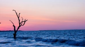Visiting This One Beach In South Carolina Is Like Experiencing A Dream