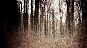 This Park In Maryland Has A Dark And Evil History That Will Never Be Forgotten