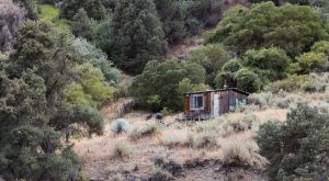 Nobody Knows Who Built This Survival Shelter Then Left It To Rot In The Middle Of Nowhere