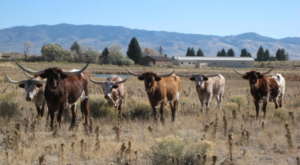 10 Reasons Why You Should Never, Ever Move To Wyoming
