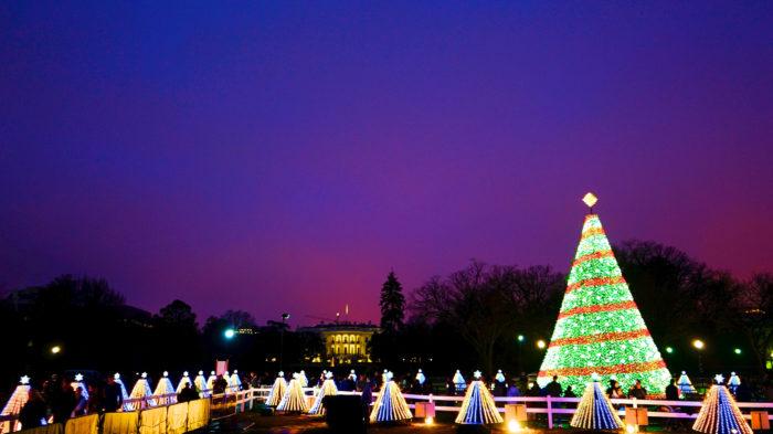 see the christmas trees - Christmas In Washington
