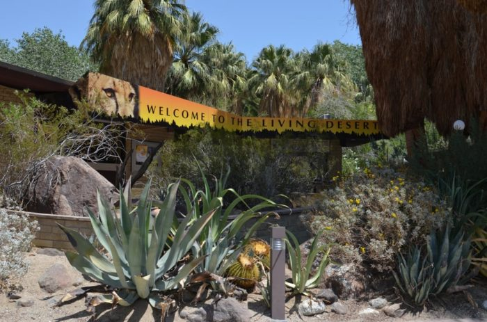 The Living Desert Zoo And Gardens Is A Hidden Gem Attraction In Southern California