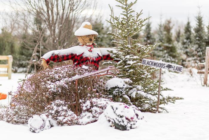 Minnesota Christmas Tree Farms