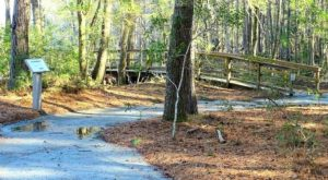 9 Easy Hikes To Add To Your Outdoor Bucket List In South Carolina