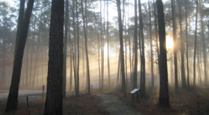 This Haunted Virginia Swamp Is Like Something From A Horror Movie