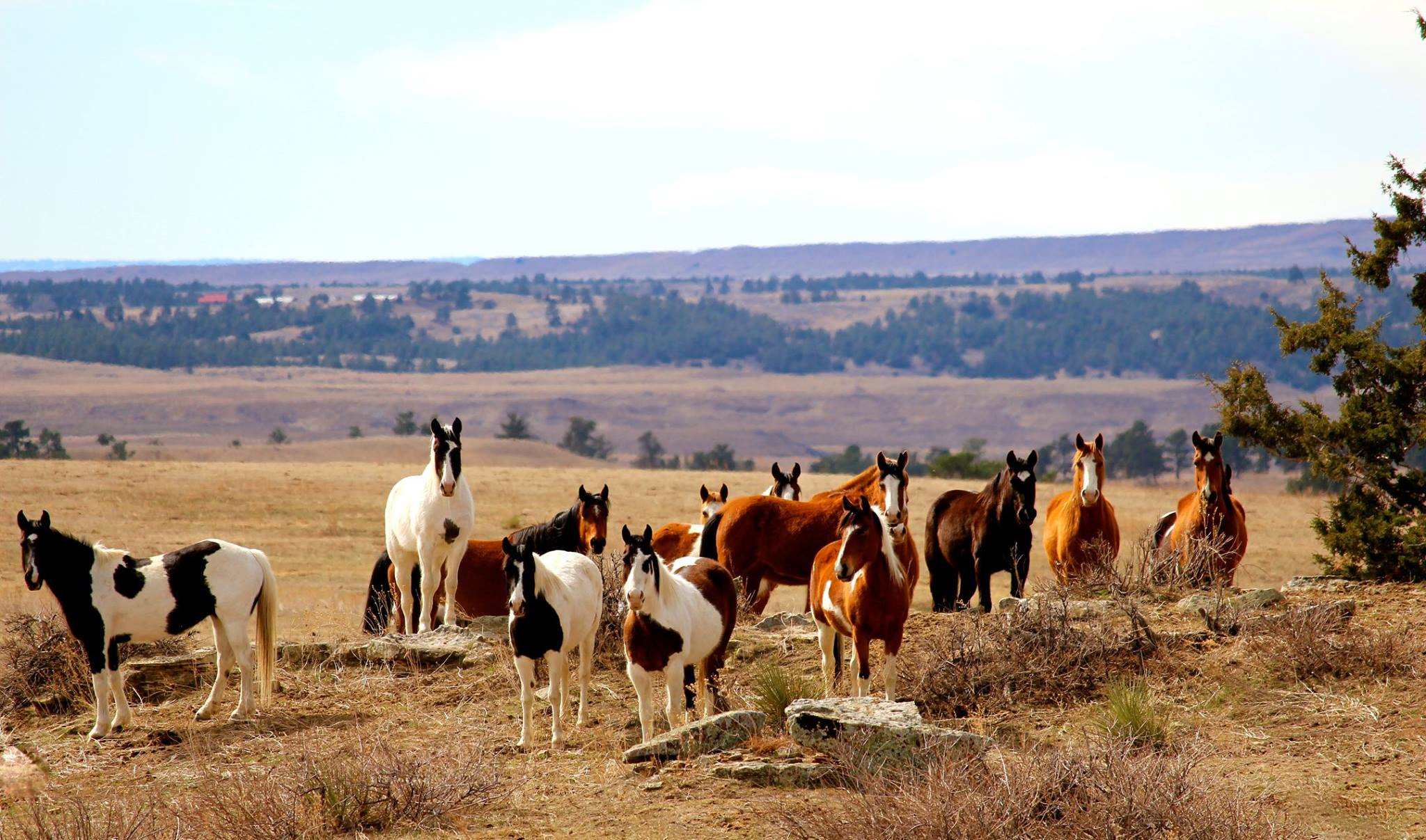 The Black Hills Wild Horse Sanctuary South Dakota Public Induced Info