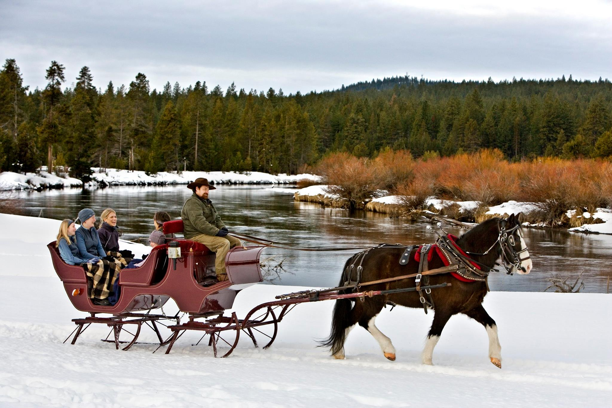 Horse Drawn Sleigh. This would make a beautiful Christmas ... |Horse Drawn Sleigh Rides Christmas