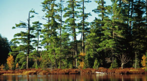 Michigan's Old-Growth Forest Is A Marvelous Hidden Gem You'll Want To Explore