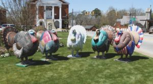 Giant Turkeys Have Taken Over This Small Town In South Carolina. Here's Why.