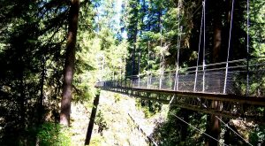 The Terrifying Swinging Bridge Near Portland That Will Make Your Stomach Drop