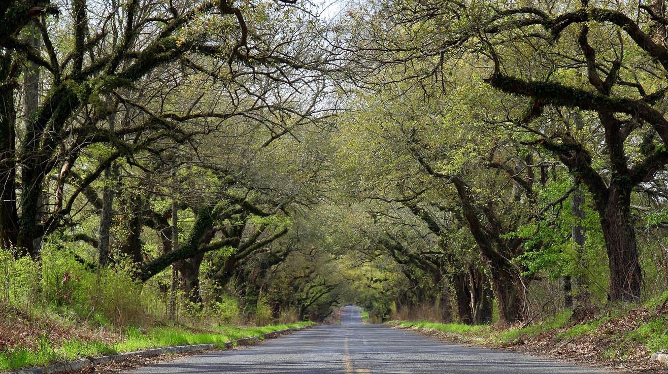 Mississippi S Tunnel Of Trees Is Absolutely Incredible
