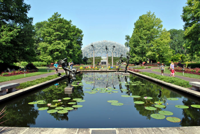 Canna group Plant Finder Missouri Botanical Garden - satukis.info
