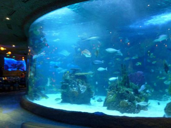 The Tennessee Aquarium Restaurant Is The Most Unique In