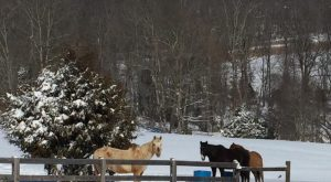 The Winter Horseback Riding Trail In Kentucky That's Pure Magic
