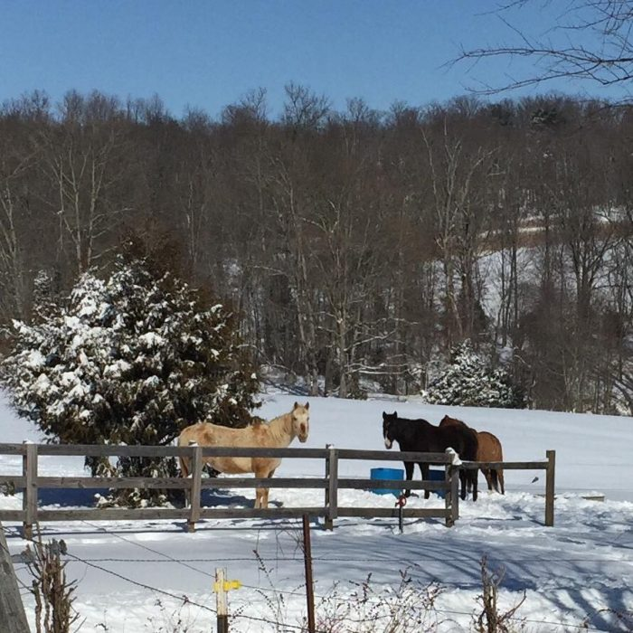 Houston Texas Snow >> Double J Stables Has The Winter Horseback Riding Trail In Kentucky That's Pure Magic
