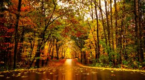 7 Amazing State Parks Around Minneapolis That Will Blow You Away