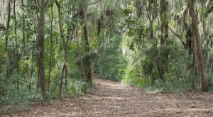 The Haunted Hike In South Carolina That Will Send You Running For The Hills
