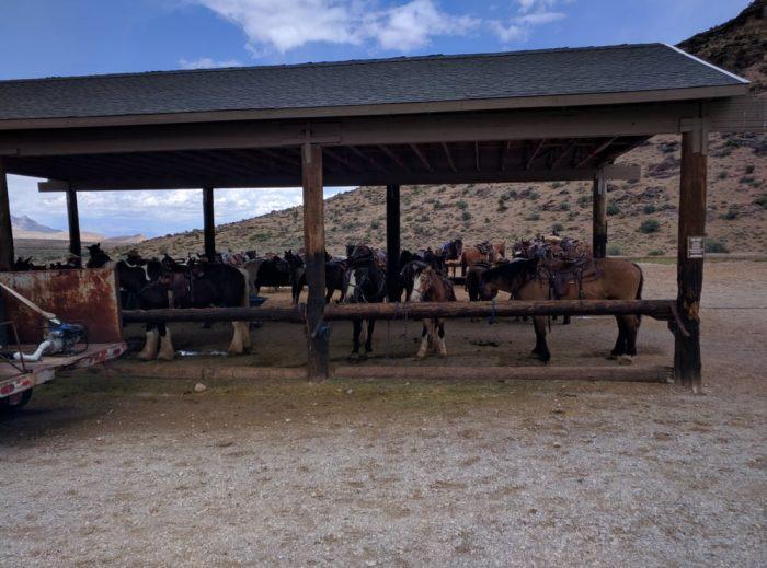 Cowboy Trail Rides