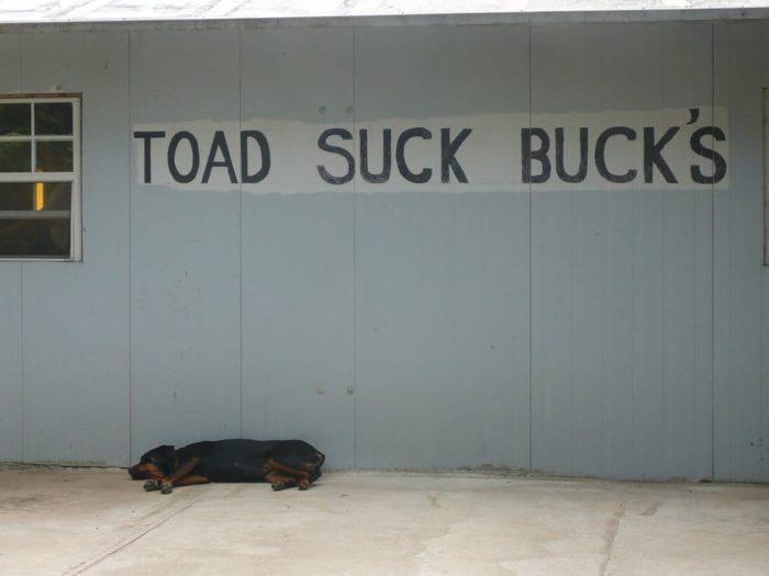Arkansas Toad suck bucks
