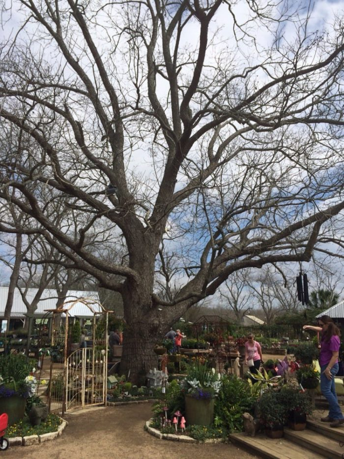 Enchanted Forest Is More Than Just A Garden