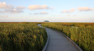 Take A Drive Along Louisiana's All-American Road For An Unforgettable Experience