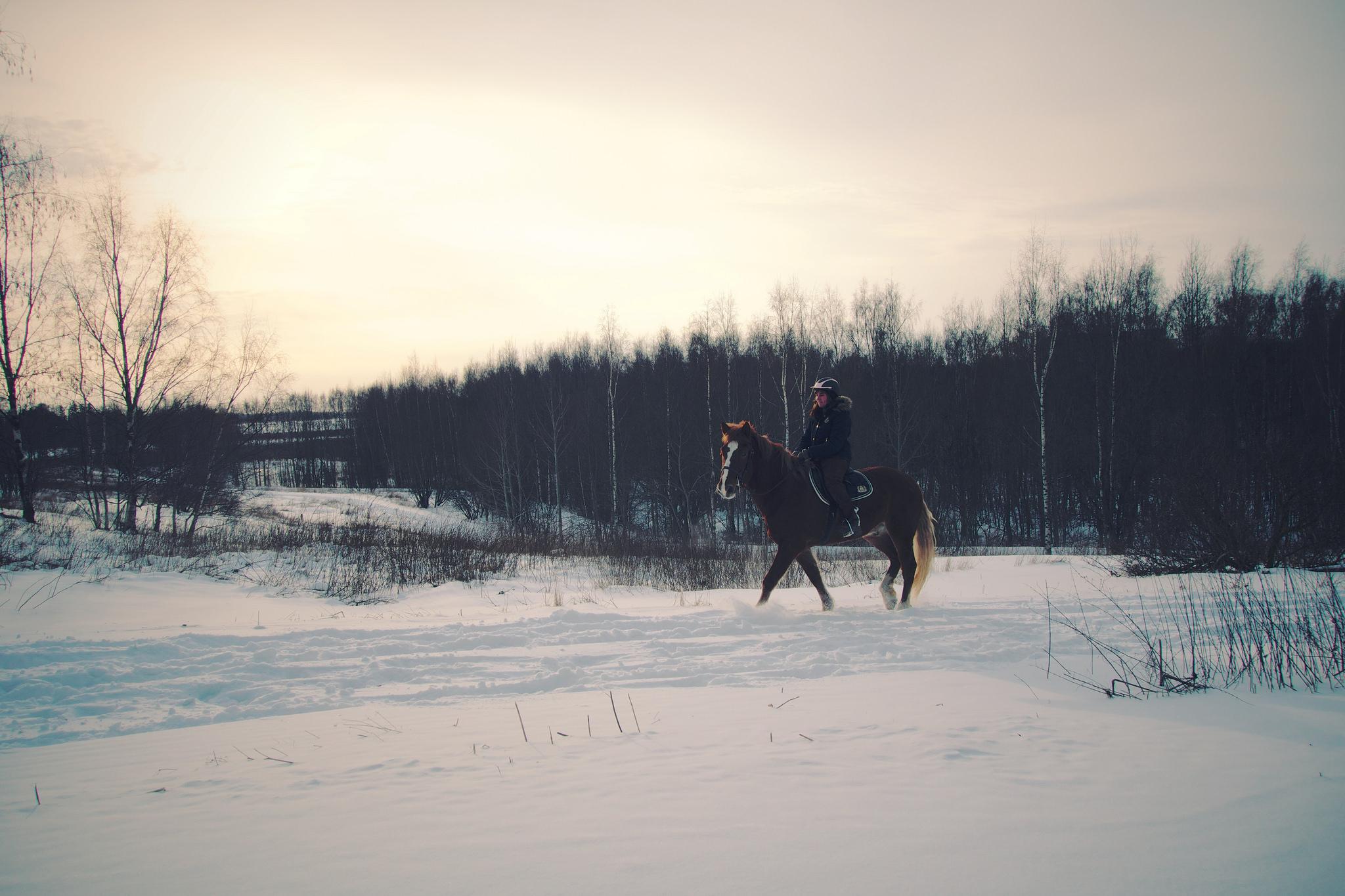 Horseback Riding Tampa Florida