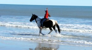 The Winter Horseback Riding Trail In South Carolina That's Pure Magic