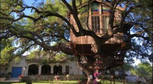 This Restaurant In Texas Is Actually A Treehouse And You Need To Visit