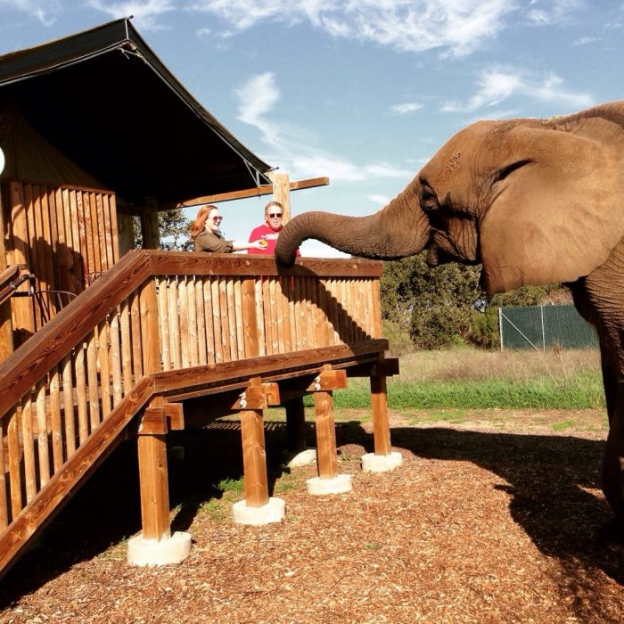 You Can Dine With Elephants At This Unique Wildlife Park