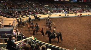Oklahoma Is The Horse Show Capital Of The World And Here's Why